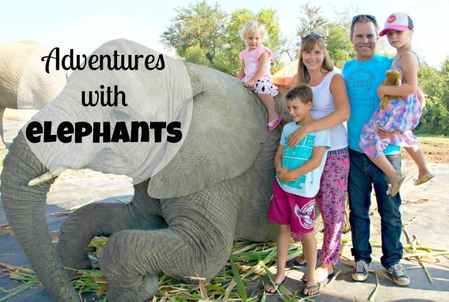 adventures with elephants 1