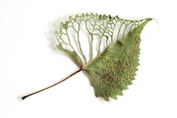 Embroidered Leaf, by Hillary Waters Fayle