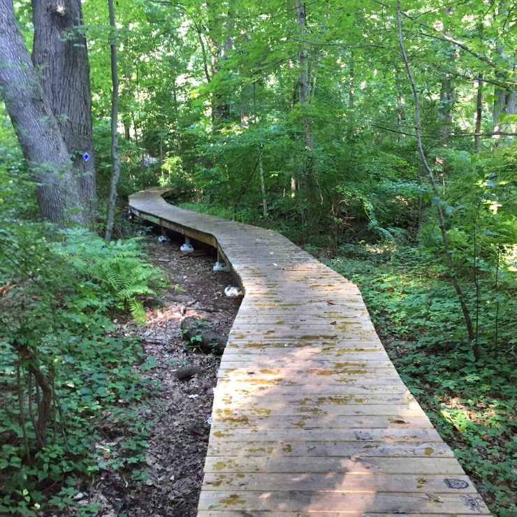 Leatherstocking Trail in lower westchester as an easy walking trail, great for when you dont want to go on a big hike but still want to get some fitness in!