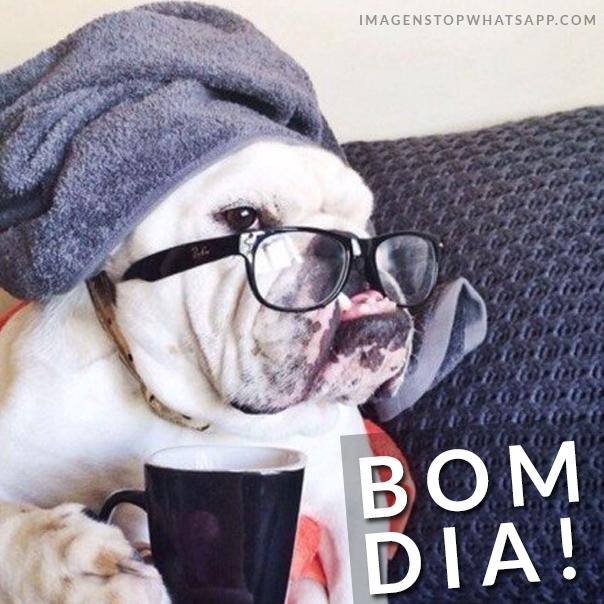 Cachorro engraçado dizendo bom dia