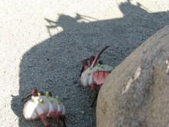 """""""Paranoia Bugs"""" in San Francisco. Photograph by Eben Kirksey."""