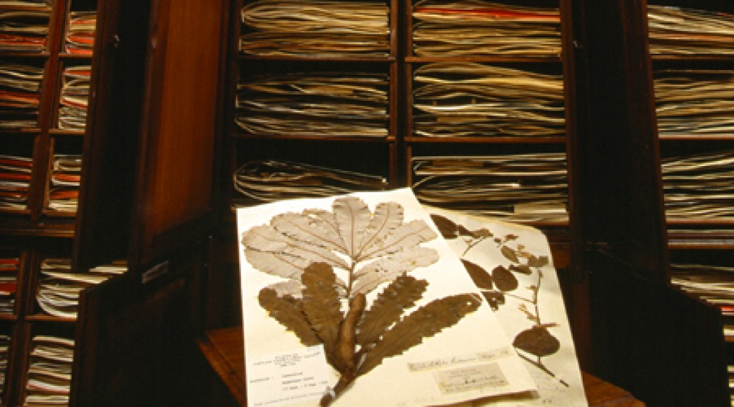 photograph-of-sloane-herbarium-specimen-volume_33277_1