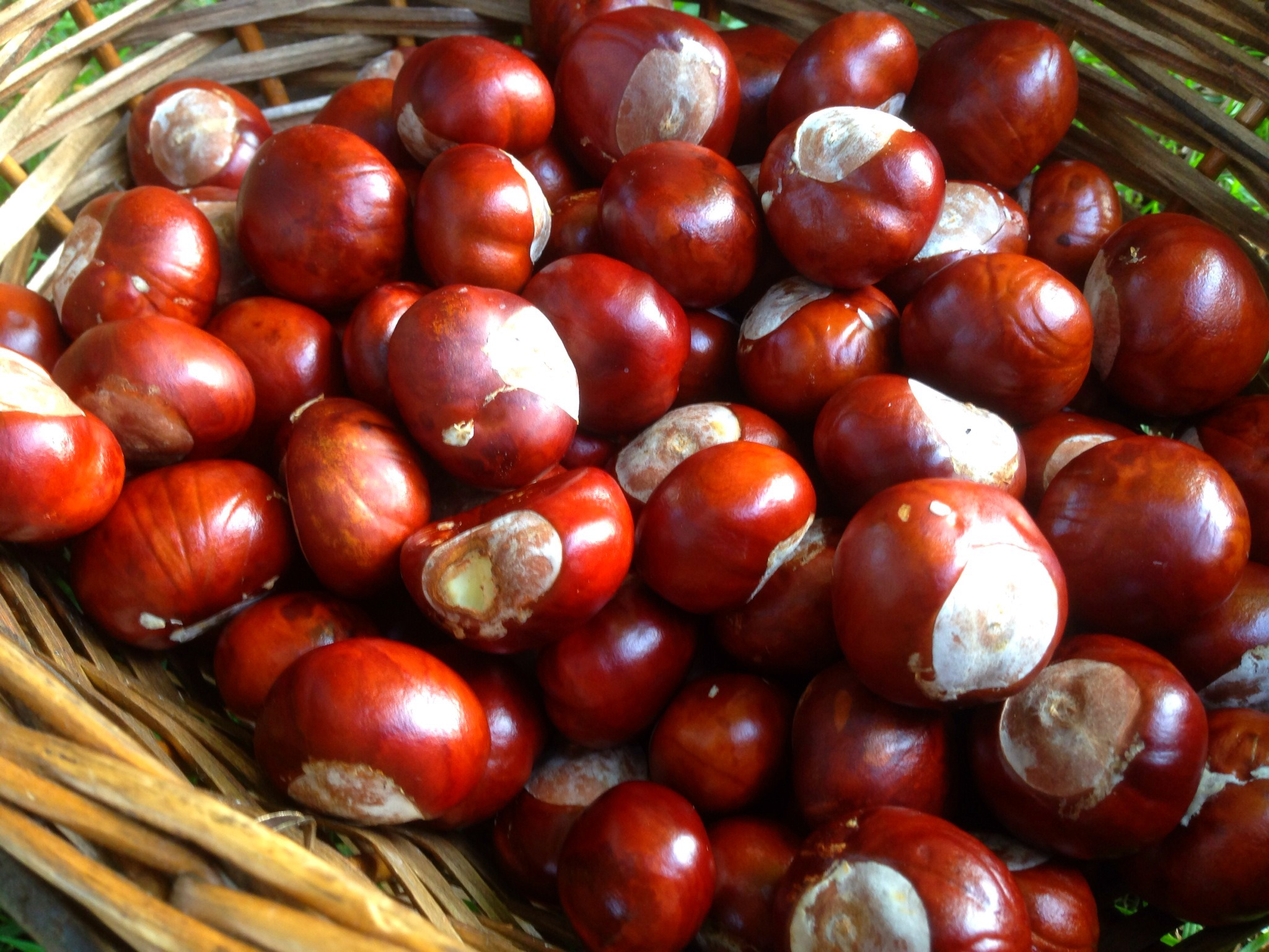 How to Play Conkers pictures