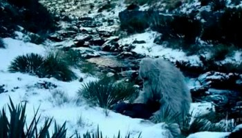 El famoso naturista Sir David Attenborough decidido a encontrar al Yeti