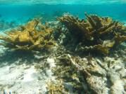 Segunda maior barreira de corais do mundo