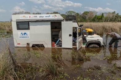 Encalhou no Pantanal brasileiro