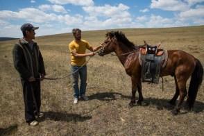 Cavalos meio selvagens