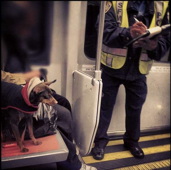 fido vs inspector on muni