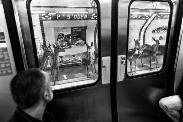 deers on subway thomas subtil