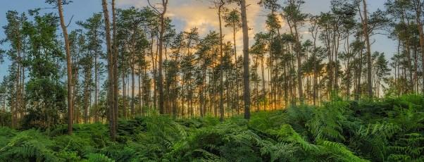 Forest-Lights