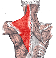 Trapezius exercise