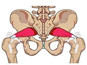 Piriformis muscles