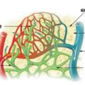 300px-Illu_lymph_capillary-ja