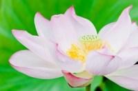 ELLY99_pinkironohasunohana500-thumb-260xauto-3646