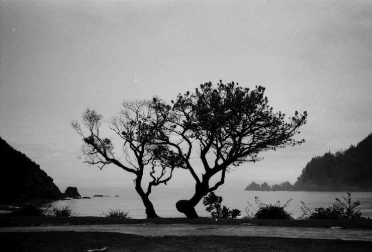 TriX_Tree