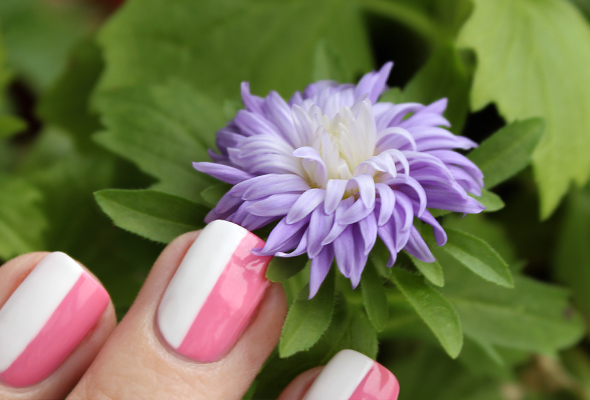 Violet aster flowers