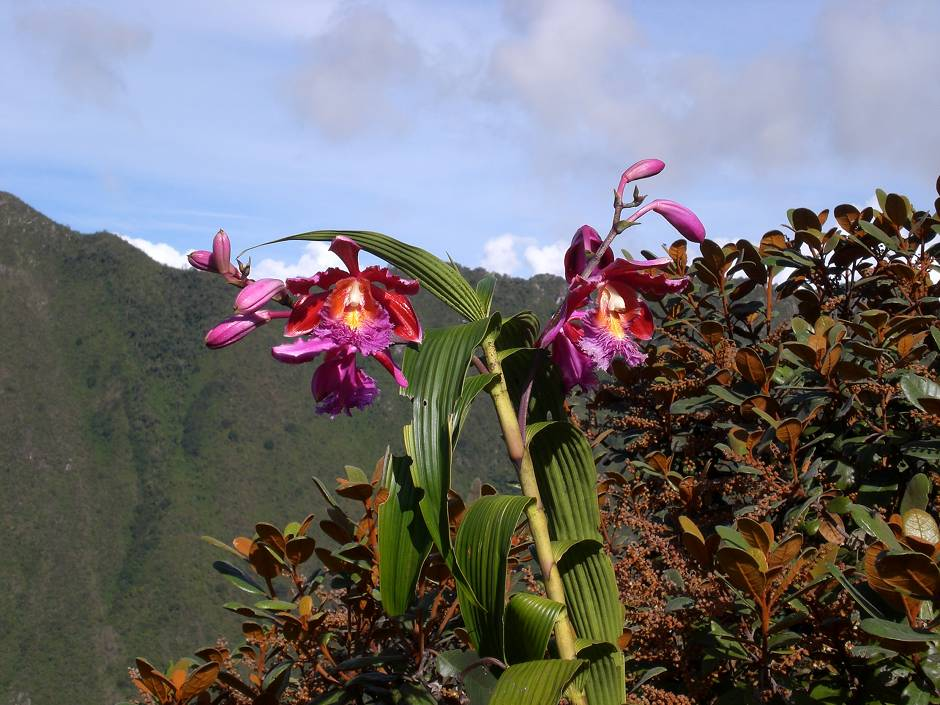 Lush nature on the Inca Trail