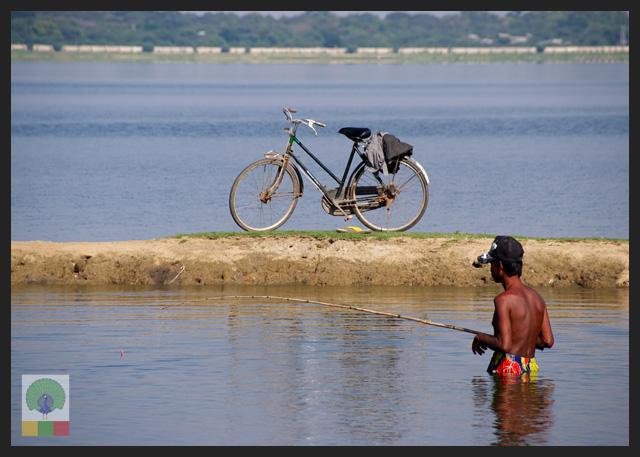 U Bein Teak Bridge - Fishing at Taungthaman Lake - Amarapura - Mandalay - Myanmar (Burma)