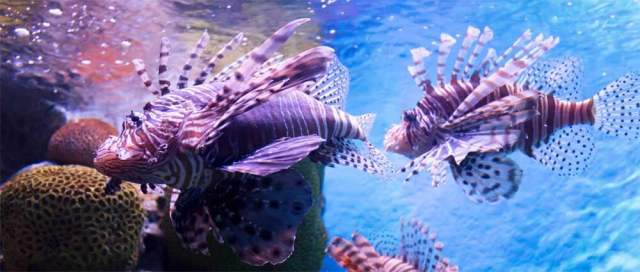 Saltwater vs. Freshwater 75 Gallon Fish Tanks   MyAquarium