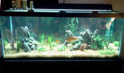 Top Fin 75 Gallon Hooded Aquarium Kit ? Reviewed & Spec?d.