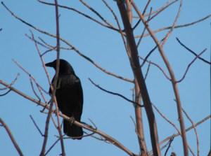 file_crow