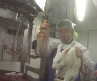 Idaho Ag-Gag Law Unconstitutional