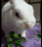 Rabbit Health Lecture July 17