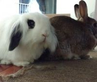 Rehoming Needed for SoCal Bunnies