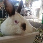 Theodore Rabbit – Rescued Feb 14, 2014