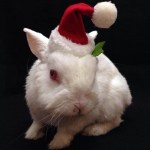 Don't Forget Bunnies this Holiday Season