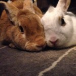 Two Weeks to Rabbit Seminar