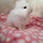 The Bunny Burrow