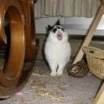 Rabbit Gregorian Monk Chants