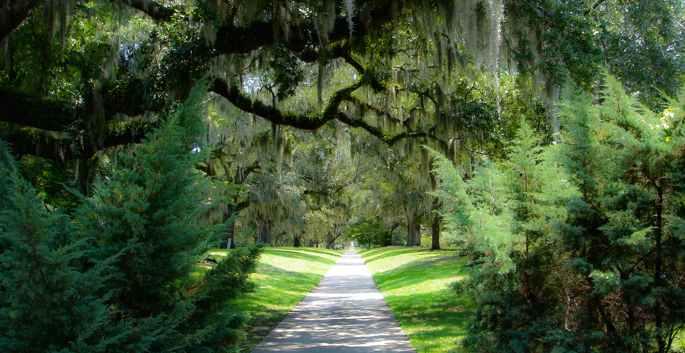 pawleys-island-trees