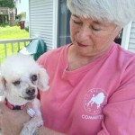 Rescuer Daryl Masone of Naugatuck holds Dove Bar, a miniature poodle, who had an eye removed after being neglected by her previous owner in her home earlier this year. –RA ARCHIVE
