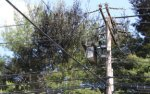Fallen tree causes outages