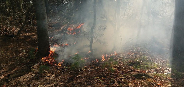 slide_news_brushfire2