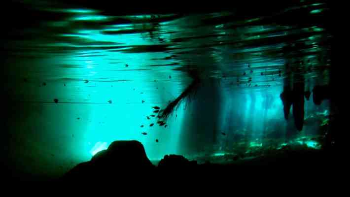Snorkelling in the Best Cenotes near Tulum in Mexico