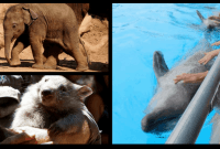 Do You Love Animals? Read This Before Planning Your Trip