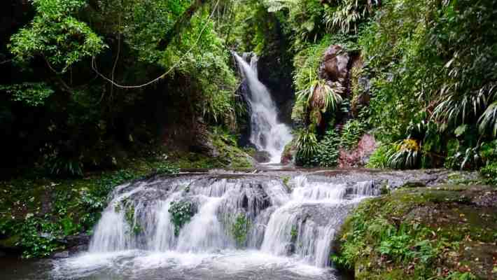 Adventures in Lamington National Park: Box Forest Circuit & Elabana Falls