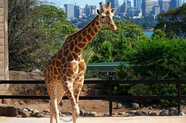 An Alternative to Zoos to Stop Keeping Animals Captive