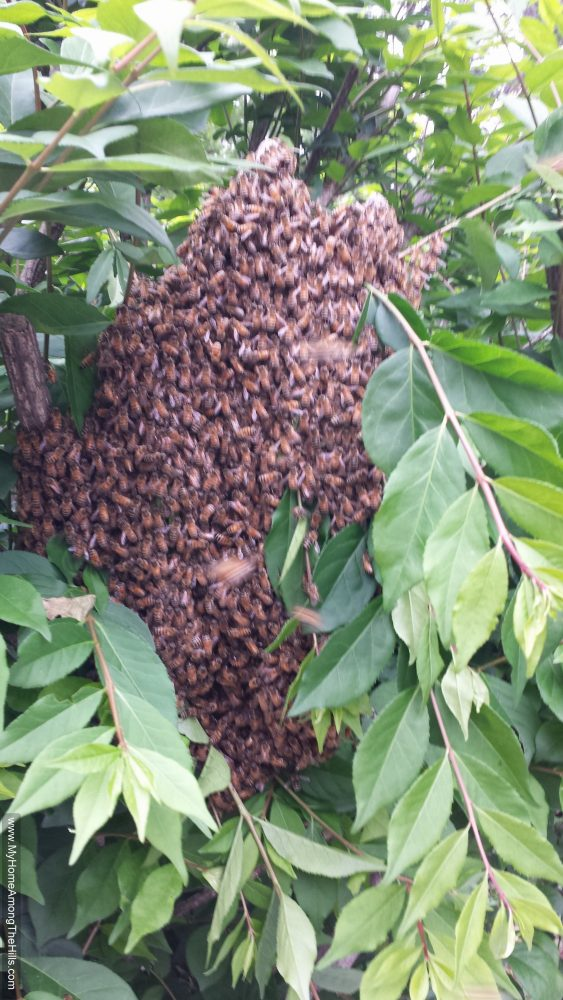 A big swarm in a bush