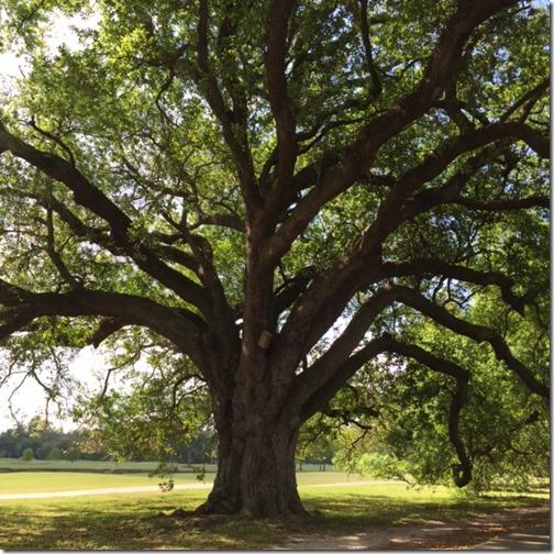 NOLA_Audubon Park
