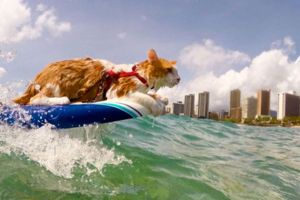 surfer cat hanging ten