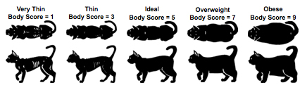 cat wieght chart