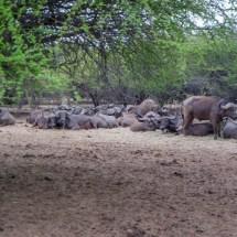 bufalo group