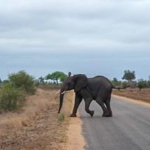 elephant on street