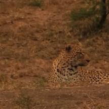 lepard close
