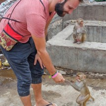 Jaipur-monkey feeding I