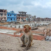 Jaipur-whatsuuuup little monkey